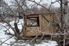 Alimentador vacío de los pájaros en árbol durante la estación del invierno Fotos de archivo libres de regalías