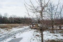 Alimentador vazio de madeira dos pássaros na árvore durante a estação do inverno Imagens de Stock