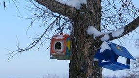 Alimentadores caseiros do pássaro video estoque