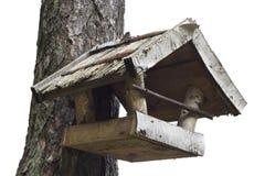 Alimentadores del pájaro Fotos de archivo libres de regalías