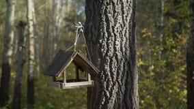 Alimentadores del pájaro en el bosque
