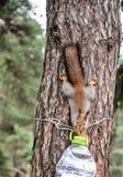 Alimentadores del pájaro en los árboles del otoño foto de archivo libre de regalías