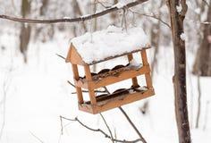 Alimentadores del pájaro en rama Foto de archivo libre de regalías