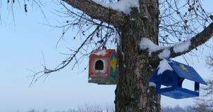 Alimentadores del pájaro en un árbol almacen de video