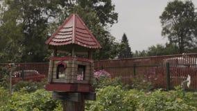 Alimentadores do pássaro Casa na árvore para os pássaros, apartamento alegre vídeos de arquivo