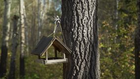Alimentadores do pássaro na floresta vídeos de arquivo