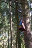 Alimentadores para los pájaros en el parque de la ciudad fotografía de archivo libre de regalías