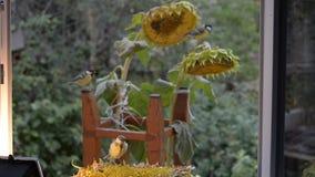 Alimentadores para pássaros no jardim video estoque