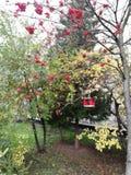 Alimentadores para pássaros no jardim do outono imagens de stock royalty free