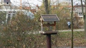 Alimentadores para pássaros no parque da cidade vídeos de arquivo