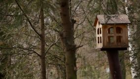 Alimentadores para pássaros no parque da cidade video estoque
