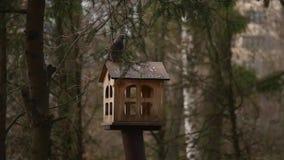 Alimentadores para pássaros no parque da cidade filme
