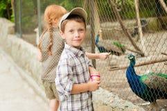 Alimentan los niños en los pavos reales del parque zoológico Fotografía de archivo libre de regalías