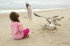 Alimentando as gaivota Imagens de Stock