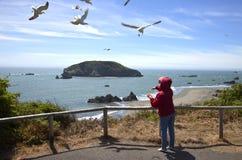 Alimentando as gaivotas, OU., litoral. Imagens de Stock