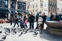 Alimentando as pombas em Højbro Plads em Copenhaga Imagens de Stock