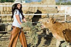 Alimentando as vacas Imagens de Stock