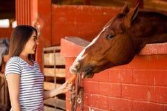 Alimentando a mi caballo algunas zanahorias Fotos de archivo