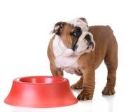 Alimentando o cão Fotografia de Stock