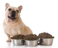 Alimentando o cão Imagem de Stock Royalty Free