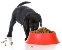 Alimentando o filhote de cachorro Fotografia de Stock Royalty Free
