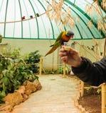 Alimentando o pássaro Imagens de Stock