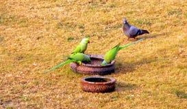 Alimentando os pássaros Fotos de Stock