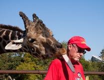 Alimentando um Giraffe Imagens de Stock