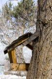 Alimentar-calha para pássaros Fotos de Stock