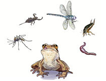 Alimentation d'amphibies illustration de vecteur