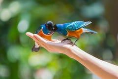 Alimentation d'oiseau images libres de droits