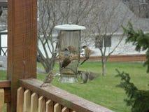 Alimentation d'oiseaux Photos stock