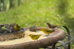 Alimentation d'oiseaux photo stock