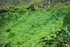 Alimentation d'une tortue en île des îles Maurice de parc naturel de vanille image stock