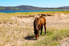 Alimentation de cheval Photographie stock libre de droits