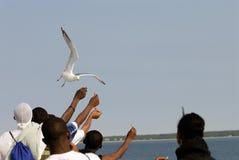 Alimentation de l'oiseau Photographie stock libre de droits