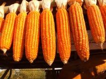 Alimentation de maïs Photographie stock