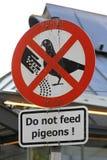 Alimentation de pigeons photographie stock libre de droits