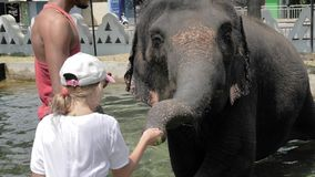 Alimentation des animaux Sri Lanka 4k au ralenti d'éléphant clips vidéos