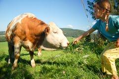 Alimentation des enfants une vache Images libres de droits