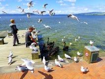 Alimentation des oiseaux Photos libres de droits