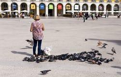 Alimentation des oiseaux Photo libre de droits