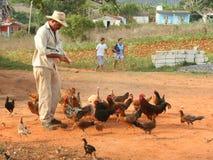 Alimentation des poulets photo libre de droits