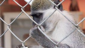 Alimentation du singe dans le zoo banque de vidéos