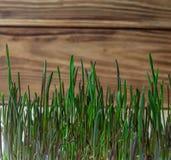 Alimentation saine verte de régime de forme physique de germe de blé naturelle photo stock