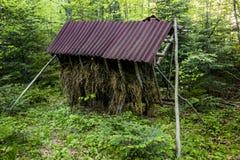 Alimentatore animale in foresta fotografia stock libera da diritti