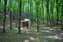 Alimentatore animale nella foresta, cura degli animali Immagini Stock Libere da Diritti