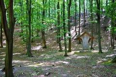 Alimentatore animale nella foresta, cura degli animali Fotografia Stock