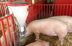 Alimentatore automatico per bestiame immagine stock