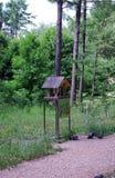 Alimentatore degli uccelli nel giardino di estate fra l'abetaia fotografie stock libere da diritti